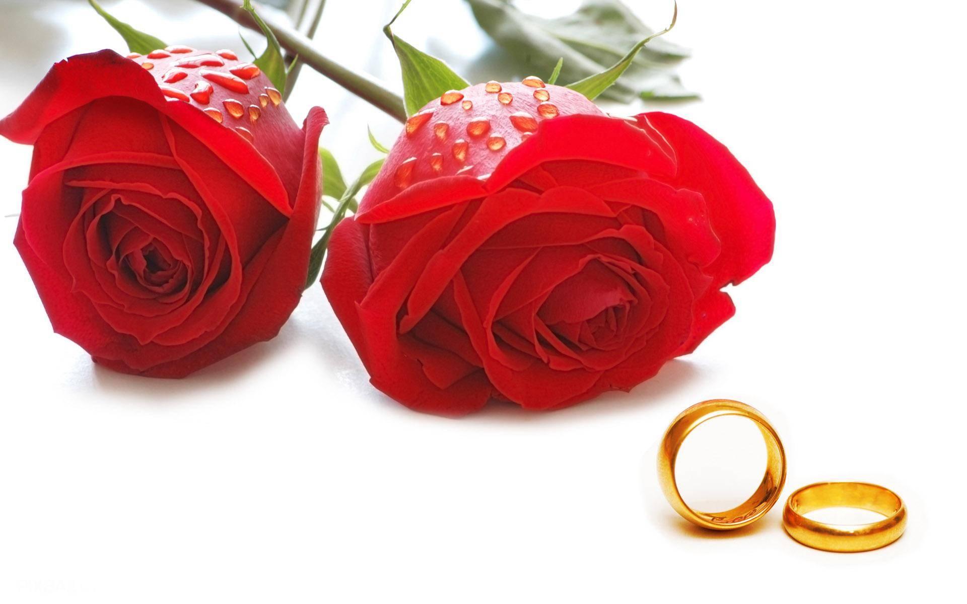 تعطیلی موقت فروشگاه به علت ازدواج مدیریت فروشگاه یاس